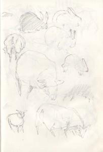 St-Magleby-får