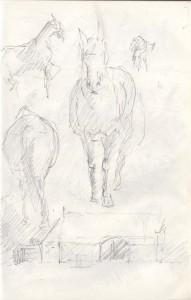 St-Magleby-heste