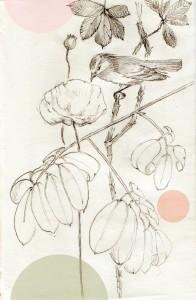 kolibri-1-e1437920517739