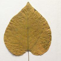 gult blad